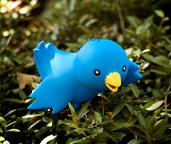 Twitter bird image